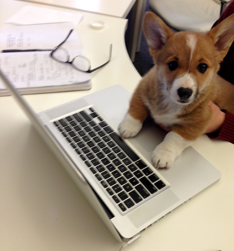 One Columbus digital marketing agency allows dogs in their workplace to boost productivity and moods. This is Cohen.