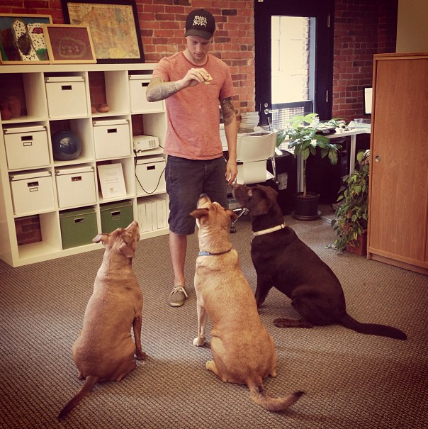 One Columbus digital marketing agency allows dogs in their workplace to boost productivity and moods.